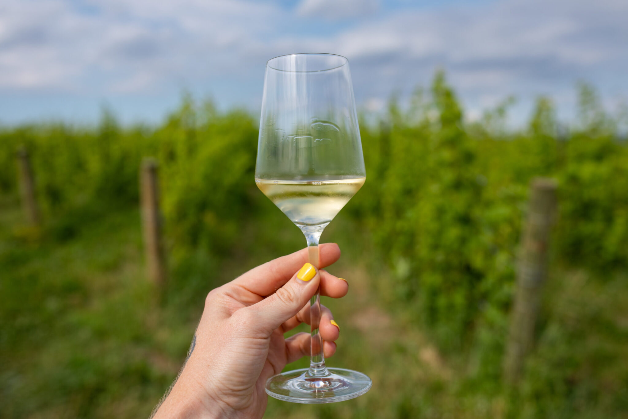 The Value-Added Argument for Sustainable Winegrowing in New York