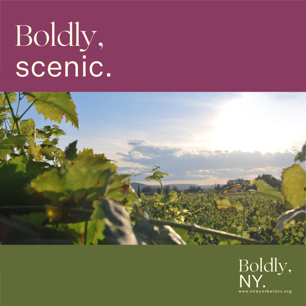 """Vineyard Scene with header that reads, """"Boldly, scenic. Boldly, NY."""""""